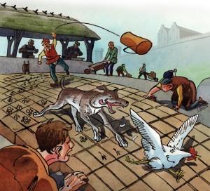 hund-jagter-høne